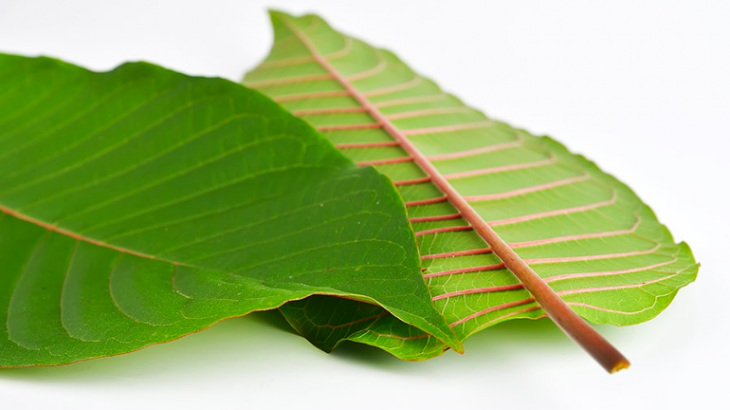 Understanding These 4 Keys Can Make Your Purchase Kratom Look Beautiful